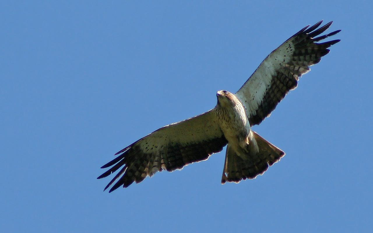 0111 aigle-botte