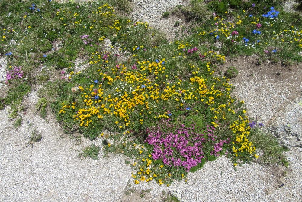 fleurs coussins